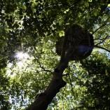 Cabane-nid-d-aigle-22m-dans-les-arbres