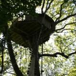 Cabane-nid-d-aigle-dans-les-arbres