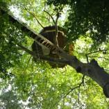 Cabane-nid-d-aigle-pont-de-singe