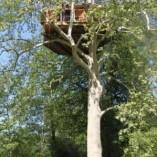 Cabane ilot, dormir en haut des arbres