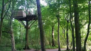 cabane arbres