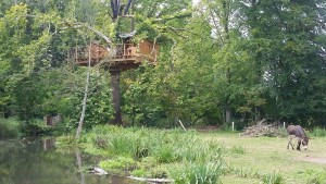 cabane arbre normandie